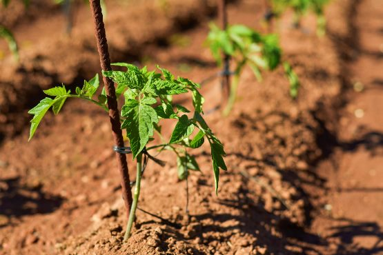 V juliju 2018 cene inputov v kmetijstvu malenkostno višje