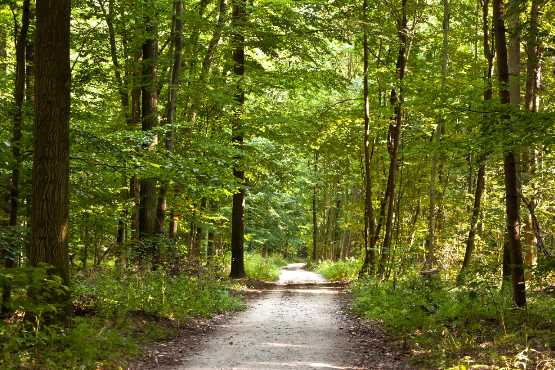 V 2017 je v slovenskih gozdovih delalo okrog 7.000 delavcev, okrog 20 % več kot v letih pred ujmo