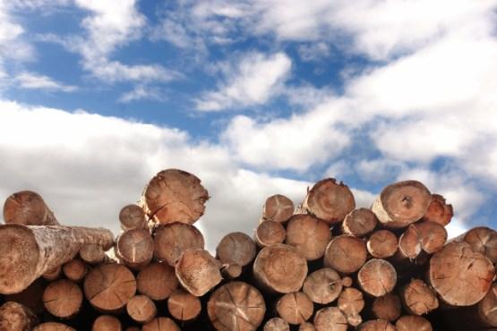 Vrednost odkupa okroglega lesa v juniju 2019 za približno 39 % nižja kot v juniju 2018