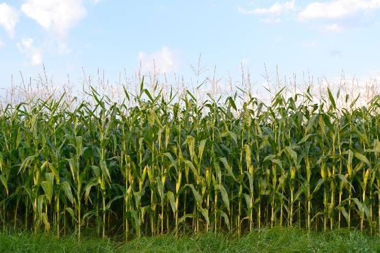 Cene kmetijskih pridelkov pri pridelovalcih v novembru 2019 povprečno za 7,7 % višje kot v novembru 2018