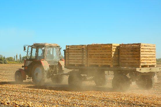 Cene kmetijskih pridelkov pri pridelovalcih v avgustu 2019 povprečno za 4,8 % višje kot v avgustu 2018