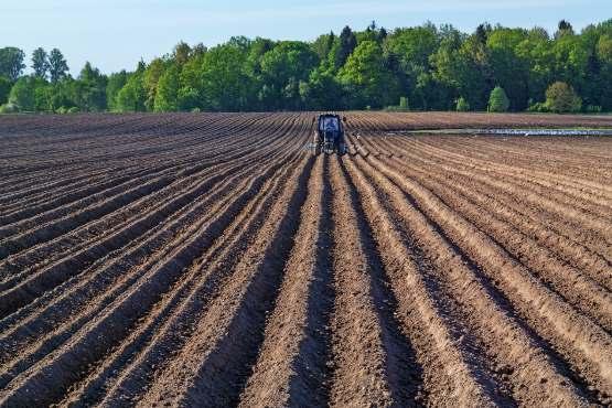 Realni faktorski dohodek na PDM v kmetijstvu naj bi bil v 2018 tudi po drugi oceni za 24% višji kot v 2017