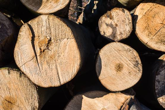 Vrednost odkupa okroglega lesa v novembru 2019 za približno 33 % nižja kot v novembru 2018
