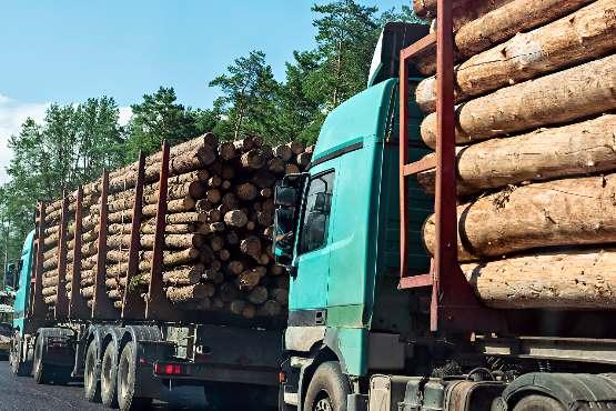 Vrednost odkupa okroglega lesa v marcu 2020 za približno 13 % nižja kot v marcu 2019