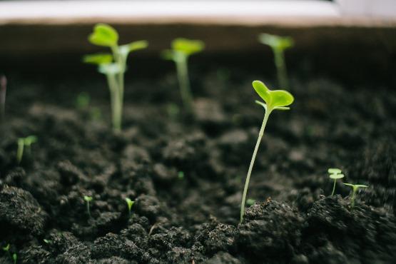 V maju 2019 cene inputov v kmetijstvu višje v povprečju za 0,4 %