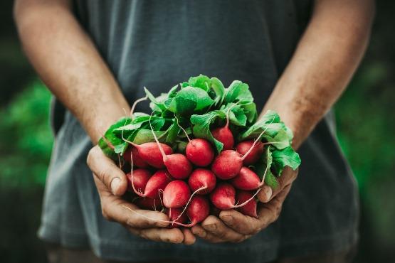 Cene kmetijskih pridelkov pri pridelovalcih v novembru 2020 v povprečju za 7,6 % nižje kot v novembru 2019