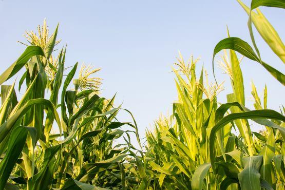 Cene kmetijskih pridelkov pri pridelovalcih v aprilu 2019 povprečno za 2,5 % višje kot v aprilu 2018