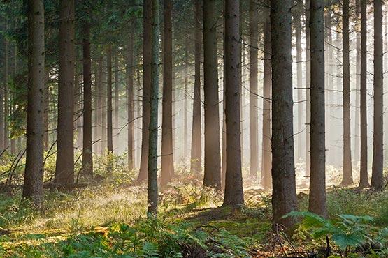 Površina vseh gozdnatih zemljišč je v 2017 obsegala skoraj 1,3 milijonov hektarjev ali 0,6 hektarjev na prebivalca