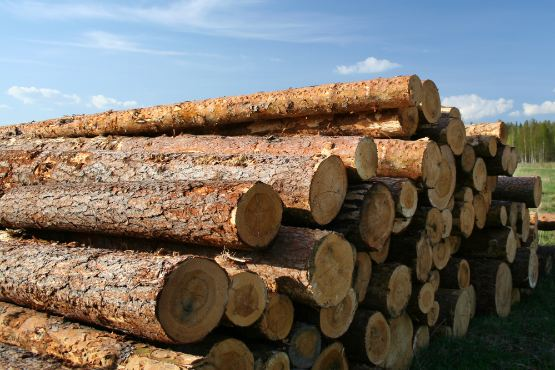 The most important renewable energy source in Slovenia is wood