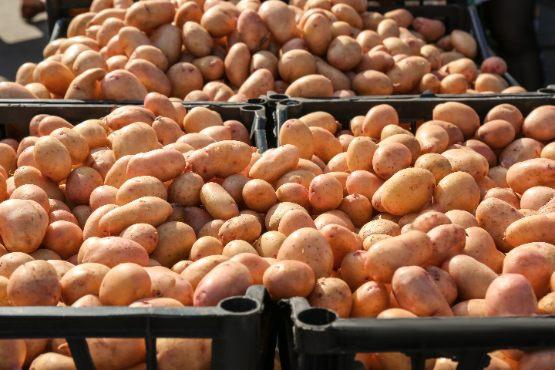 Vrednost odkupljenih kmetijskih pridelkov v 2019 za več kot 4 % višja kot v 2018