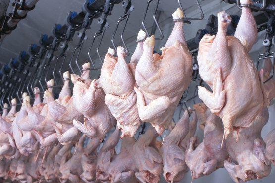 V slovenskih klavnicah so v septembru 2019 pridobili okoli 5 % več mesa kot v prejšnjem mesecu
