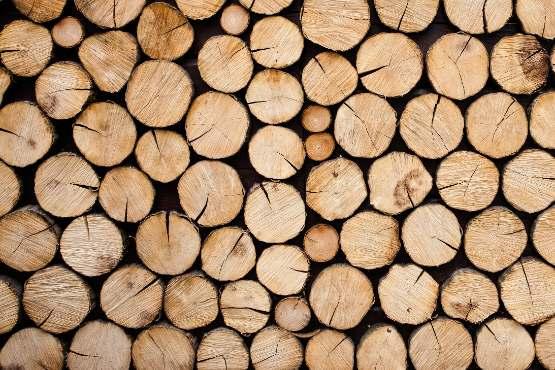 Vrednost odkupa okroglega lesa v avgustu 2020 za približno 51 % nižja kot v avgustu 2019