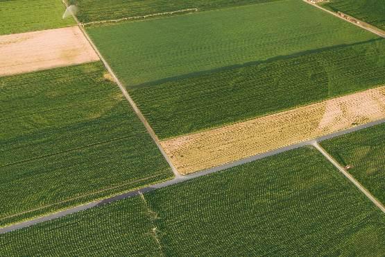 Cene kmetijskih pridelkov pri pridelovalcih v septembru 2019 povprečno za 7,6 % višje kot v septembru 2018