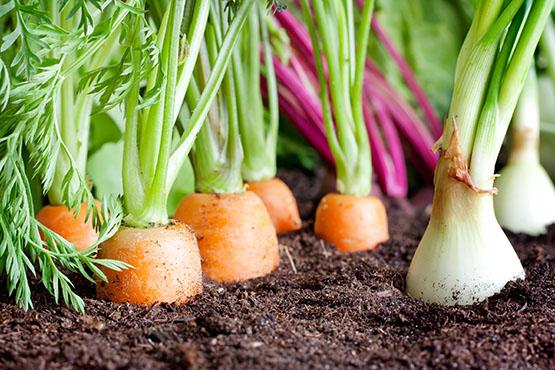 Delež površine kmetijskih zemljišč v uporabi ekoloških kmetij in kmetij v preusmeritvi je v 2019 znašal 10,4 %