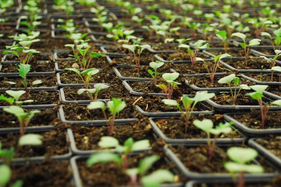 V letu 2019 cene inputov v kmetijstvu višje v povprečju za 1,2 %