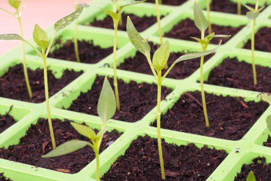 V avgustu 2020 cene inputov v kmetijstvu na mesečni ravni nižje za 0,1 %
