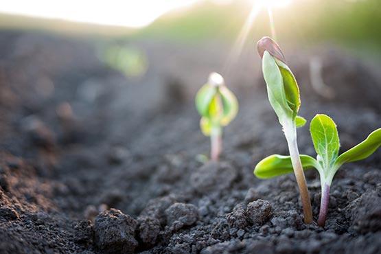 V marcu 2019 cene inputov v kmetijstvu višje za 0,7 %