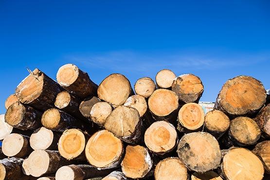 Vrednost odkupa okroglega lesa v aprilu 2019 za približno 25 % nižja kot v aprilu 2018