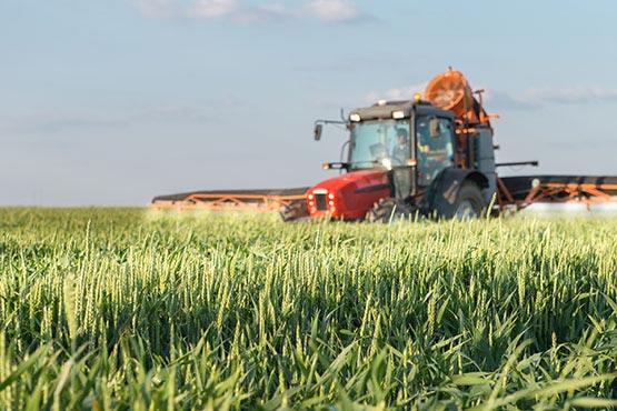 Cene kmetijskih pridelkov pri pridelovalcih v juniju 2019 povprečno za 0,5 % višje kot v juniju 2018