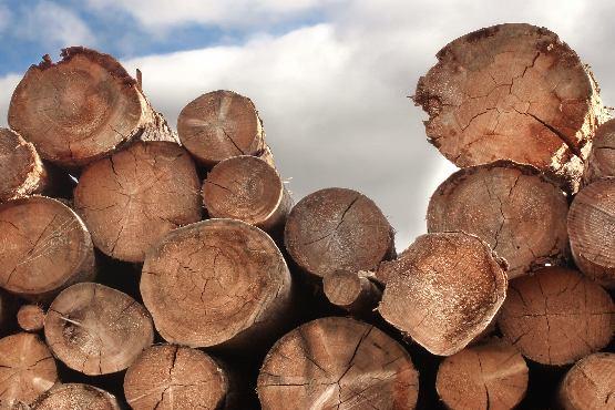 Vrednost odkupa okroglega lesa v septembru 2019 za približno 17 % višja kot v septembru 2018