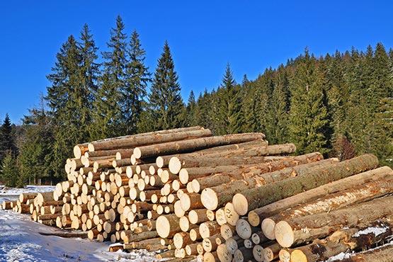 Vrednost odkupa okroglega lesa v novembru 2018 za približno 5 % nižja kot v novembru 2017