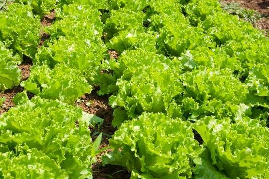 Cene kmetijskih pridelkov pri pridelovalcih v marcu 2019 povprečno za 2,0 % nižje kot v marcu 2018