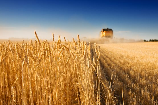 Vrednost odkupljenih kmetijskih pridelkov v novembru 2019 za približno 9 % višja kot v novembru 2018