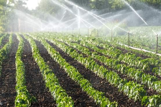 Realni faktorski dohodek na PDM v kmetijstvu bo v 2019 predvidoma za 12% nižji, kot je bil v 2018