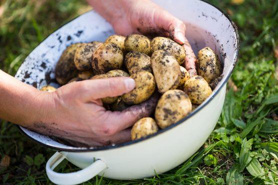 Vrednost odkupa kmetijskih pridelkov v novembru 2018 za skoraj 7 % nižja kot v novembru 2017