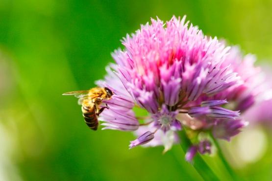 Slovenski čebelarji so v 2018 pridelali 1.746 ton medu, približno dvakrat toliko kot v prejšnjem letu