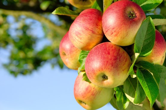 48- percentage self-sufficiency rate for fruits