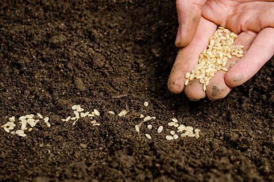 V maju 2018 mesečna rast cen inputov v kmetijstvu 0,4-odstotna