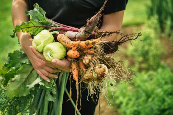 Cene kmetijskih pridelkov pri pridelovalcih v juniju 2018 povprečno za 5,4 % višje kot v juniju 2017