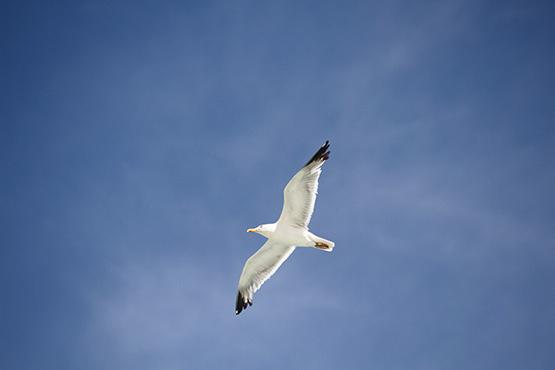 Earlier Release on Euro Bird Watch