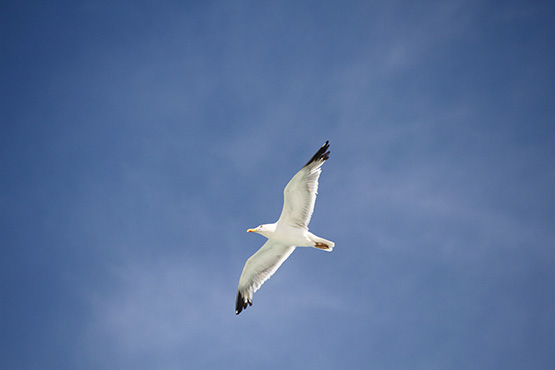 Prestavljamo izid objave Evropski dan opazovanja ptic
