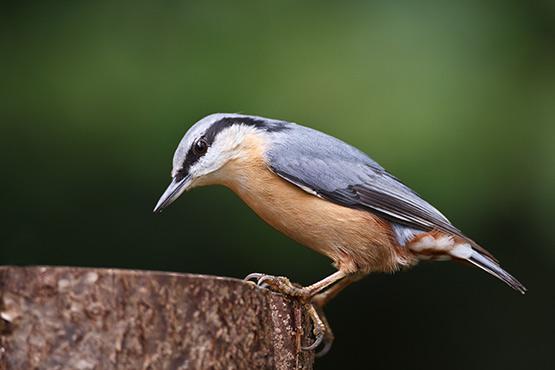 Ptice so privilegirane opazovalke lepot narave in norosti človeštva (Bruno Coulais)
