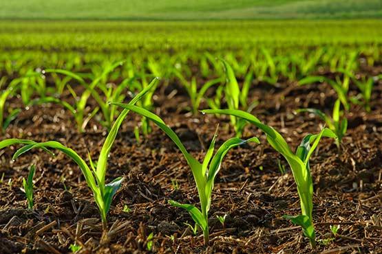 V aprilu 2018 cene inputov v kmetijstvu višje v povprečju za 0,6 %