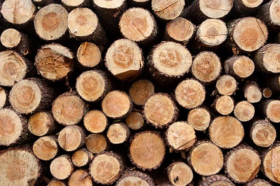 Vrednost odkupa okroglega lesa v aprilu 2018 za 15 % višja kot v aprilu 2017