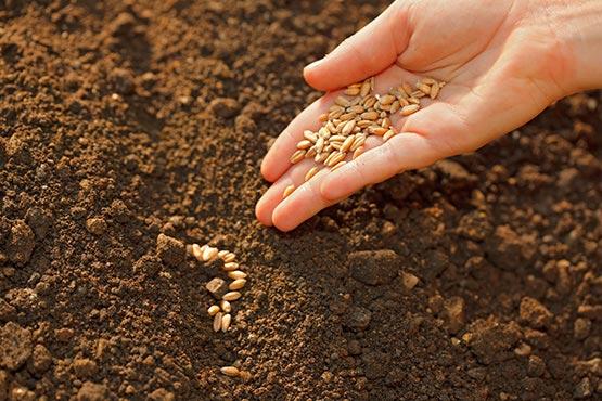Cene inputov v kmetijstvu v marcu 2018 na mesečni ravni nižje za 0,2 %