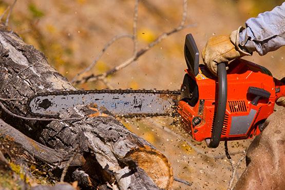Vrednost odkupa okroglega lesa v februarju 2018 za skoraj 21 % nižja kot v februarju 2017
