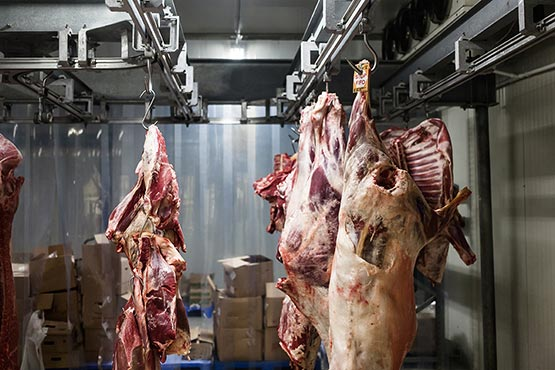 In February 2017 less meat was gained in Slovene slaughterhouses than a month before