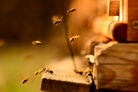 20 May became the World Bee Day on the initiative of Slovenia