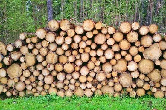 Vrednost odkupa okroglega lesa v juniju 2018 za 21 % višja kot v juniju 2017