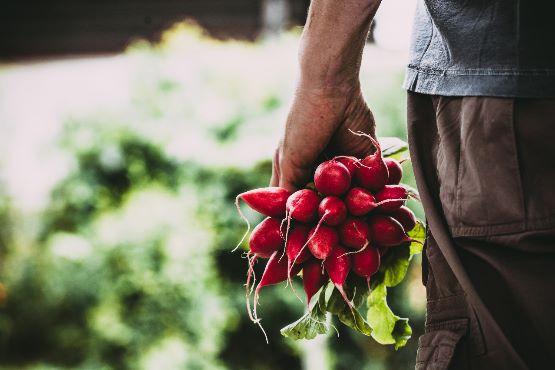 Cene kmetijskih pridelkov pri pridelovalcih v marcu 2018 povprečno za 4,7 % višje kot v marcu 2107