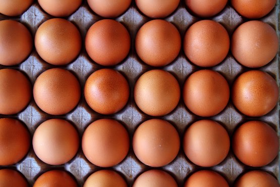 Hens in Slovenia lay on average a million eggs a day