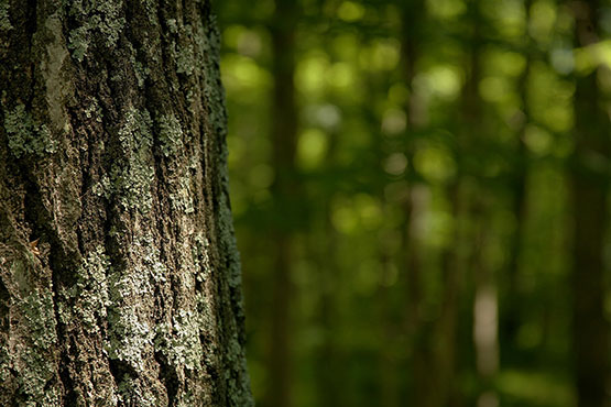 Tržna proizvodnja predstavljala 56 % vrednosti proizvodnje gozdarstva